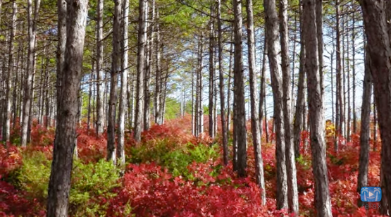 VIDEO: Enchanting Autumn Sights and Sounds